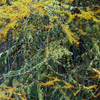 Larch and lichen